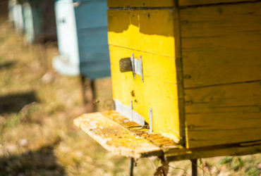 Antaes and Bees4You: A necessary partnership for the environment